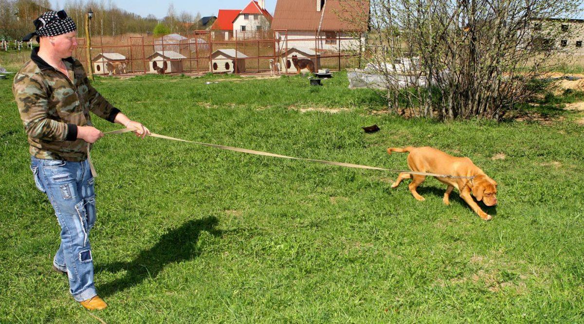 Šunų Dresūra ir šunų viešbutis